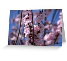 Blossoming Peach Tree Greeting Card
