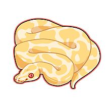 Albino Ball Python Photographic Print