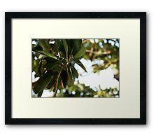 epcot - iii - manicured vegetation Framed Print