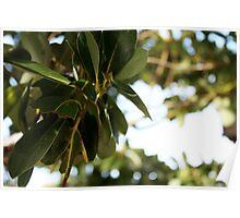 epcot - iii - manicured vegetation Poster