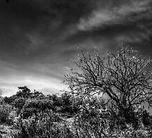 Desert Tree  by Roger Passman