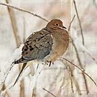 Mourning Dove - Sing No Sad Song for Me #2 by MotherNature2