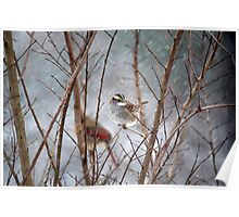 January Snow - White-throated Sparrow Poster