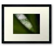 ©NS Green Deep IIA Framed Print