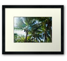 Tropical palms lit by the sun Framed Print