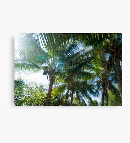 Tropical palms lit by the sun Canvas Print