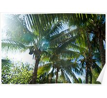 Tropical palms lit by the sun Poster