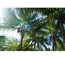 Tropical palms lit by the sun Photographic Print