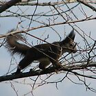 Squirrel with a Bad Hair Day on Our property in Romania by Dennis Melling