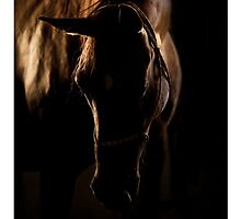 horse in sunset light by marusya1