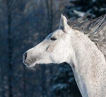 white horse by marusya1