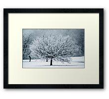 Last Winter Framed Print
