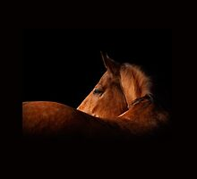 white horse on black by marusya1