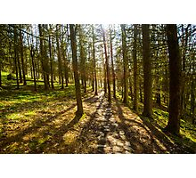 Forest Path Two Photographic Print