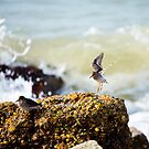 landing among the waves by thermosoflask