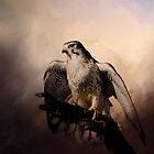 Prairie Falcon by Barbara Manis