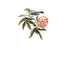 Watercolor bird and flower peony Photographic Print