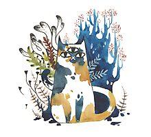 Kalanchoe - Feline Terrarium Photographic Print