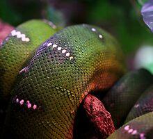 Green Snake skin abstract  by jimrac