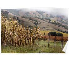 Corn and Grapevines, Mendocino  Poster