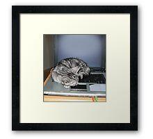Kitten finds a warm spot Framed Print