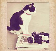 Sophie & the Camera by Linda Lees