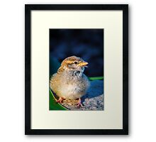 Ready for Take Off.. Framed Print