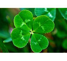lucky clover, lucky day Photographic Print