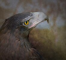Wedge tailed eagle by Jan Pudney