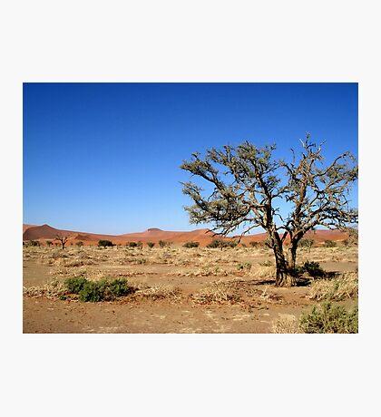 Sossusvlei landscape, Namibia, Africa Photographic Print