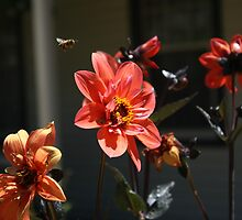 Flower and Bee by Lisa Klement