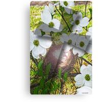Dogwood Flower and Cross Shadow Canvas Print