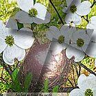John 3:16 featuring Dogwood Flower and Cross by Terri Chandler
