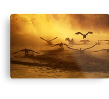 20.3.2014: Swans at River I Metal Print
