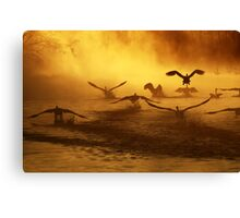20.3.2014: Swans at River I Canvas Print
