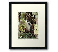 Yellow Eye Penguin Framed Print