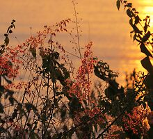 springtide's sunset - puesta del sol en la primavera by Bernhard Matejka