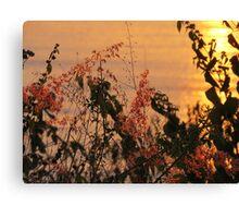springtide's sunset - puesta del sol en la primavera Canvas Print