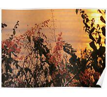 springtide's sunset - puesta del sol en la primavera Poster