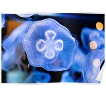 Jellyfish (Mote Aquarium) Sarasota, Florida Poster