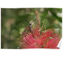 Mystery Wasp  Poster