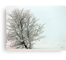 The First Day of Spring? Canvas Print
