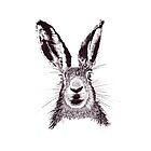 HARE 1 by Sally Barnett