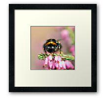 Early Bumblebee Framed Print