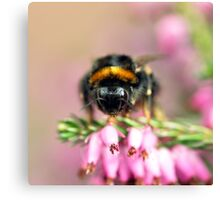 Early Bumblebee Canvas Print