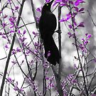 Spring Grackle by gothicolors
