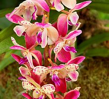 Orchid - Tropical delight by Mike  Savad