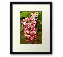 Orchid - Tropical delight Framed Print