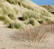 Vertical Dunes by PatiDesigns