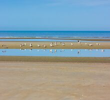 Seagulls On Shore by PatiDesigns